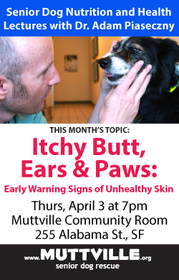 'Itchy Butt, Ears, and Paws' Monthly Senior Dog Health + Nutrition Workshop