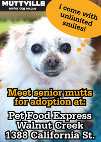 Meet Our Mutts! Muttville's Adoption Event at Pet Food Express in Walnut Creek!