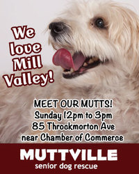 Meet Our Mutts! Muttville's Fabulous Mill Valley Adoption Event!