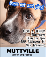 Get free love at LOVE A SENIOR SATURDAY at Muttville HQ