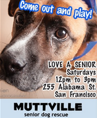 CANCELLED! LOVE A SENIOR SATURDAY at Muttville HQ