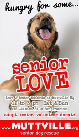 Get free love at LOVE A SENIOR SUNDAY at Muttville HQ