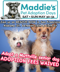MUTTVILLE JOINS MADDIE'S PET ADOPTION DAYS: Adoptions are free!