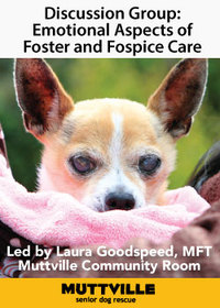 Discussion Group: Emotional Aspects of Foster and Fospice Care