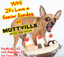 CANCELLED: Get free love at LOVE A SENIOR SUNDAY at Muttville HQ