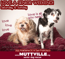 Get free love @ LOVE A SENIOR SATURDAY at Muttville HQ