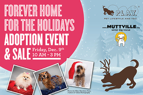 A Forever Home for the Holidays Adoption Event & Sale