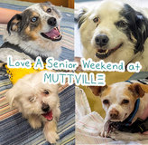 Get some lovin' at LOVE A SENIOR SUNDAY at Muttville HQ