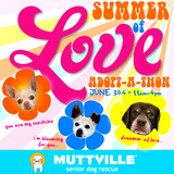 Summer of Love Adopt-a-thon!!!
