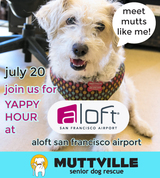 Mutt Strut Yappy Hour at Aloft!!
