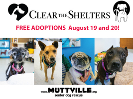 NBC's Clear the Shelters Adopt-a-thon 2017!