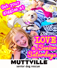 Get some lovin' at LOVE A SENIOR SATURDAY at Muttville HQ