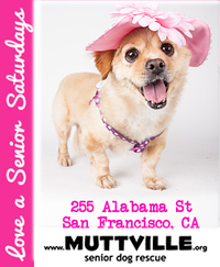 Adoption Event at Muttville HQ