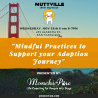 Mindful Practices to Support your Adoption Journey