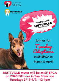 Tuesdays with Muttville & SPCA