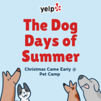 The Dog Days of Summer - Christmas Came Early @ Pet Camp