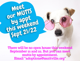 Mutts are available by appointment this weekend!