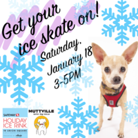 Meet our Mutts at the Holiday Ice Rink in Union Square